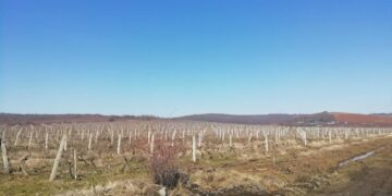 Vinogradi u Donjoj Stopanji; foto: M. Mitić