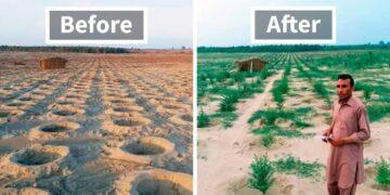Pakistan's Ten Billion Tree Tsunami - unep.org