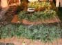 Pronađene 63 stabljike indijske konoplje; foto: Policijska uprava Niš