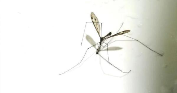 Druga akcija uništavanja insekata u nedelju i ponedeljak; foto: A. K.